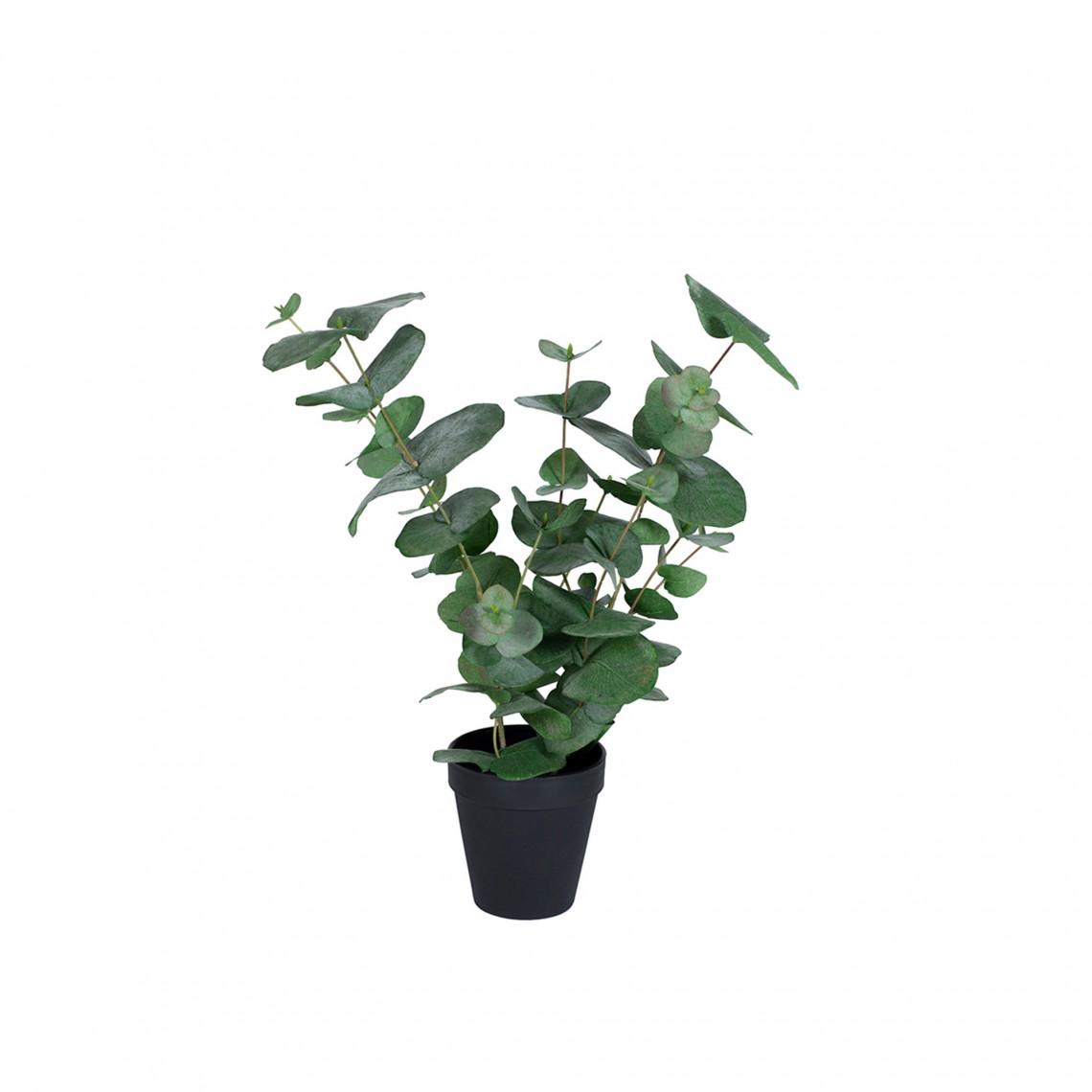 Konstväxt - Eucalyptus Small