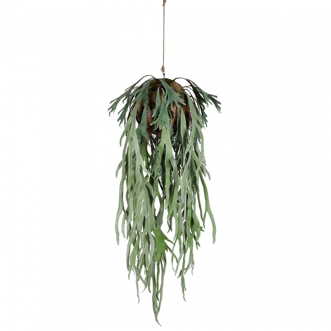 Konstväxt - Älghornsbräken