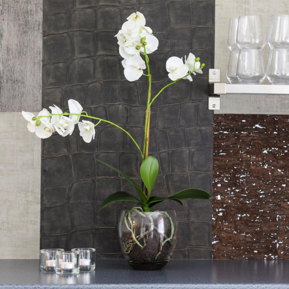 Orkidé Phalaenopsis inkl. glaskruka